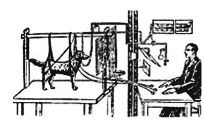 科学家的故事:巴甫洛夫——不愿做心理学家的心理学家插图(2)