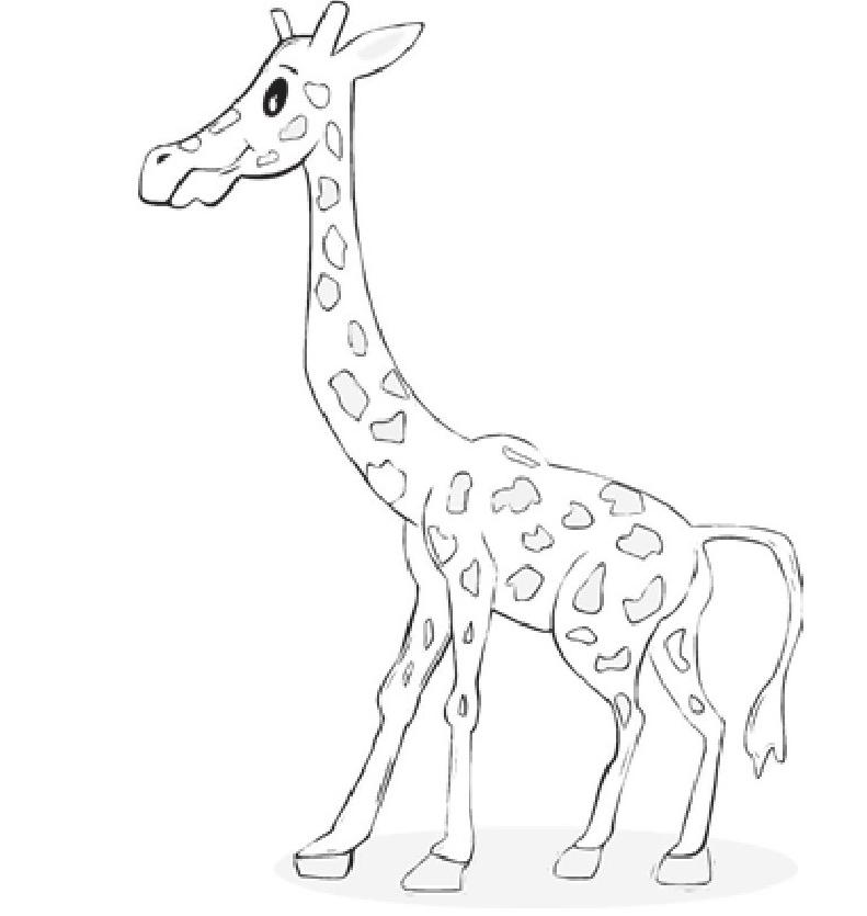 趣味生物科普知识:长颈鹿为何有这么长的脖子?插图(1)