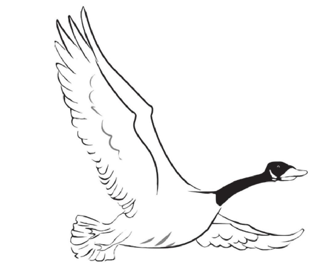 趣味生物科普知识:大雁为什么冬天往南飞插图(1)