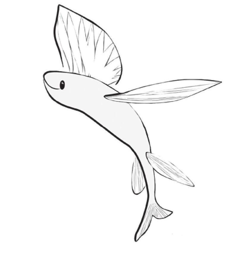 趣味生物科普知识:飞鱼为什么会飞?插图(1)