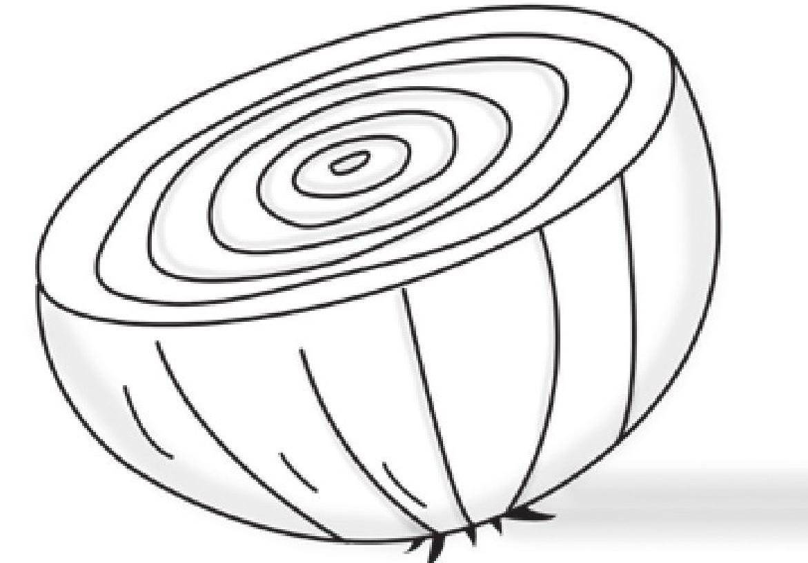 趣味生物科普知识:洋葱为什么让人流泪插图(1)