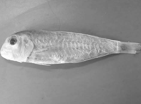 中国古代科学家的故事:海洋生物学家屠本畯插图(2)