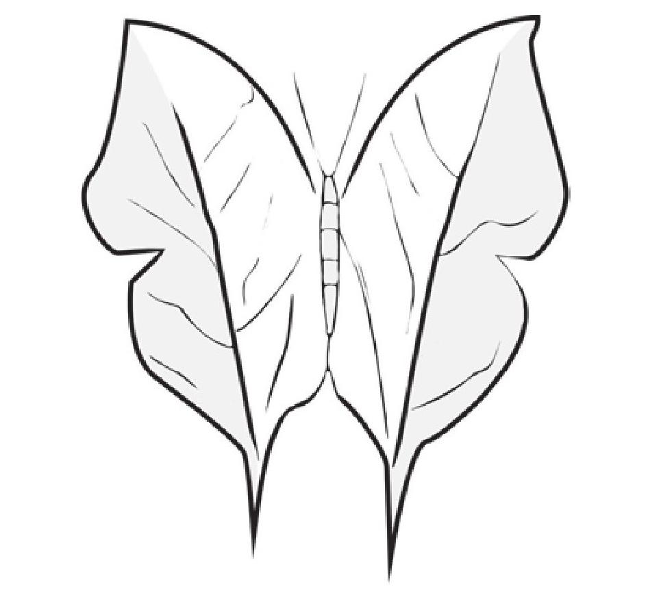 趣味生物科普知识:枯叶蝶神奇的变色隐身术插图(1)
