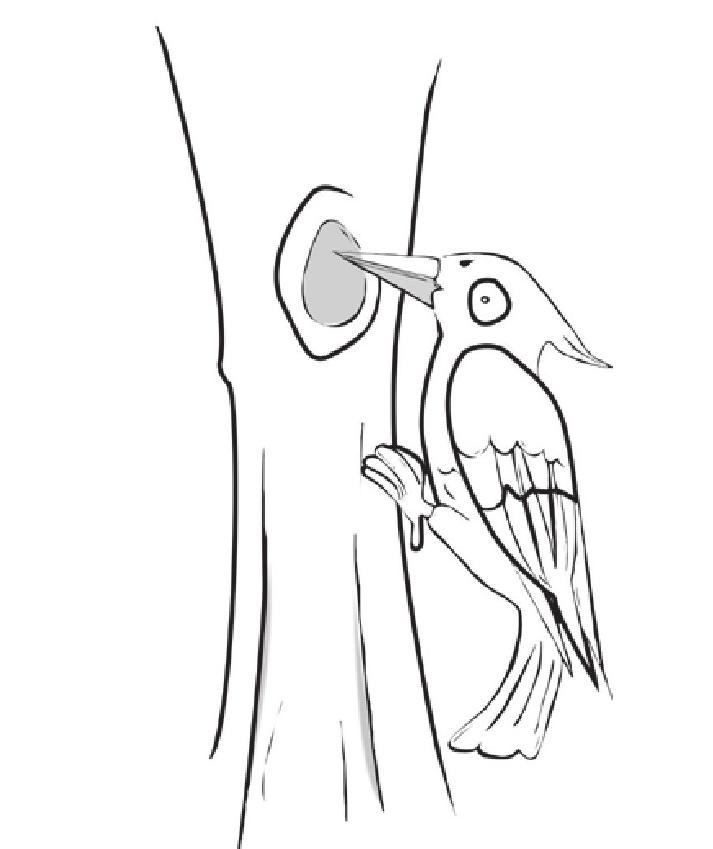 趣味生物科普知识:啄木鸟不会头晕吗插图(1)