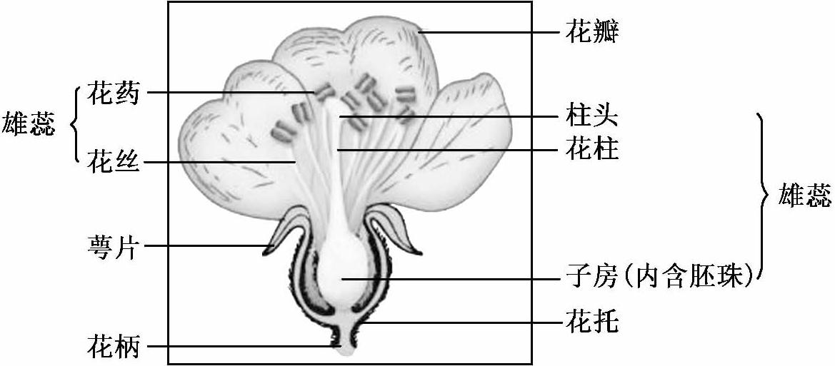 中国古代科学家的故事:遨游植物王国的吴其濬插图(2)