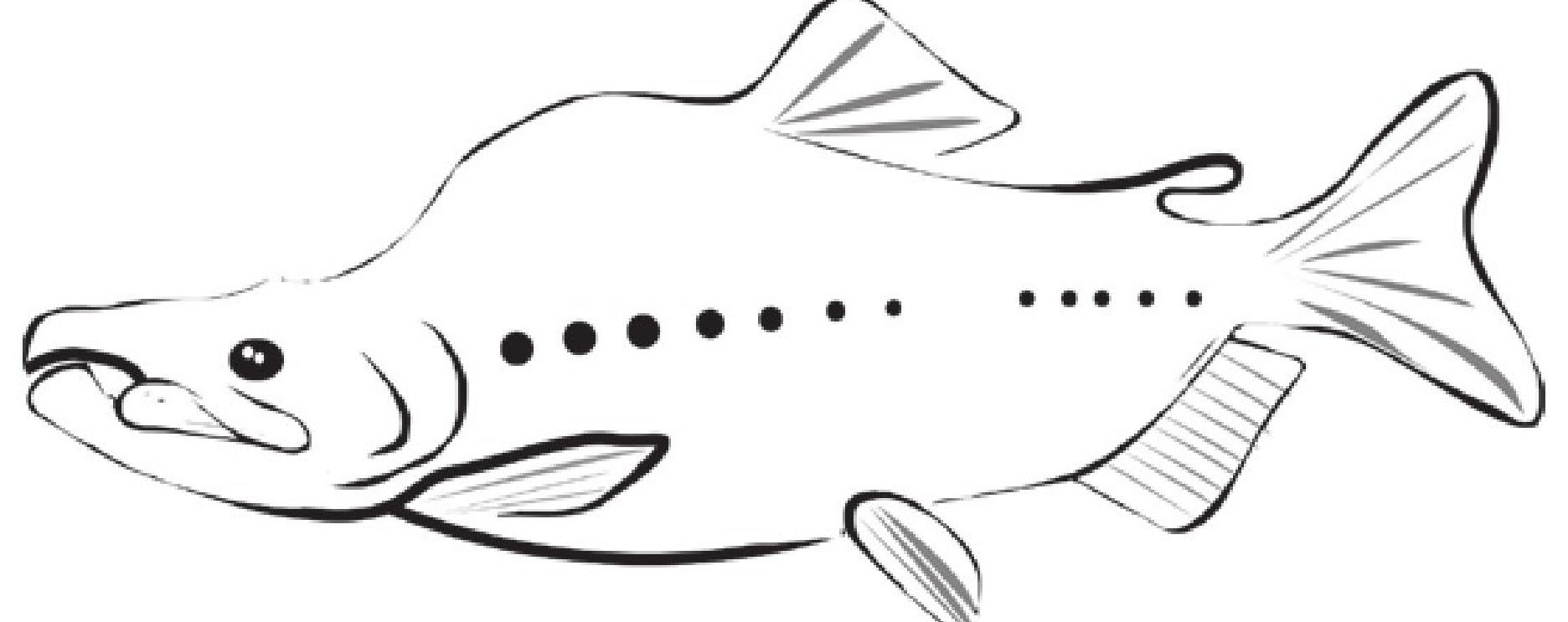 趣味生物科普知识:大马哈鱼为什么不远千里洄游?插图(1)