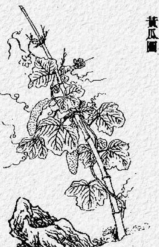 中国古代科学家的故事:氾胜之科学种田插图(1)