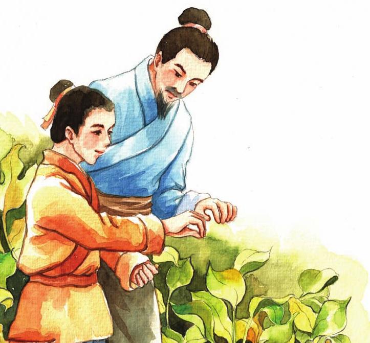 中国名人故事:种田读书的徐光启插图