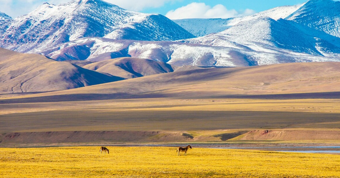 我国的四大高原是哪四个高原?其中黄土高原的范围占多少?插图(1)