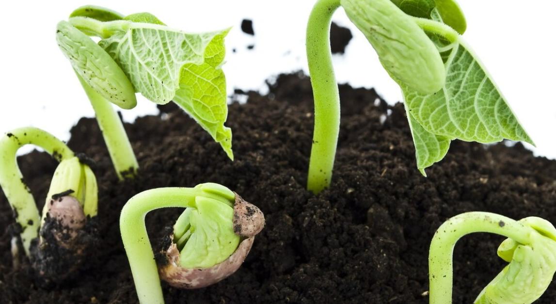 植物种子的传播方式有哪些?什么植物靠风传播种子?插图(1)