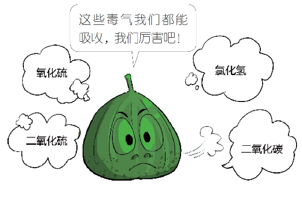 无花果为什么叫无花果,无花果名字的由来,无花果相关知识插图(3)