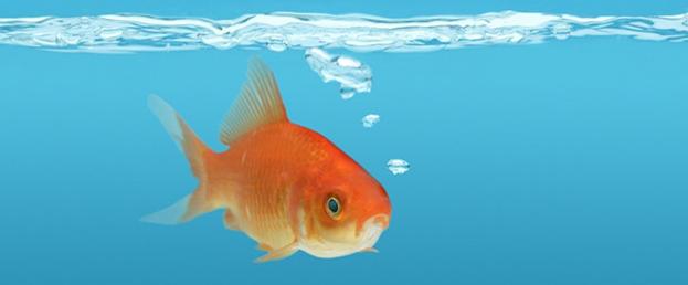为什么鱼只能在水里生活(什么鱼离水后不会死)插图(1)