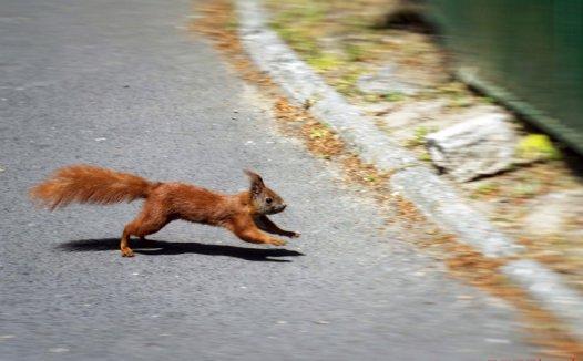 松鼠的特点和本领 松鼠喜欢跳舞?