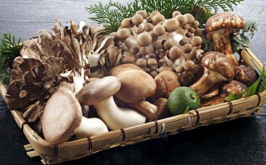 儿童生物学:菌类的形态与结构