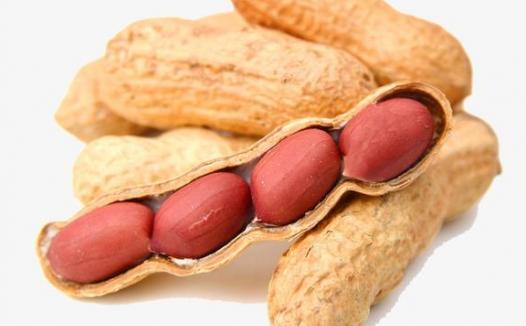 小小科学家:如何检验花生中含有脂肪呢?