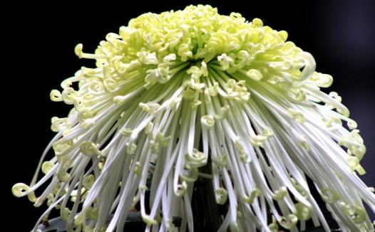 植物种子的传播方式有哪些?什么植物靠风传播种子?