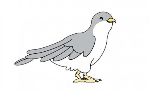 杜鹃鸟简笔画,彩色杜鹃鸟怎么画